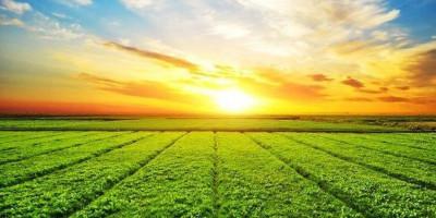 Industri Pertanian Zaman Nabi