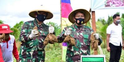 Danpasmar 3 Panen Raya Ubi Jalar Di Kab. Sorong