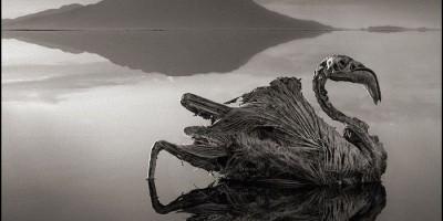 Danau Paling Berbahaya di Dunia, Nomor Lima Bisa Bikin Pengunjung Jadi Batu