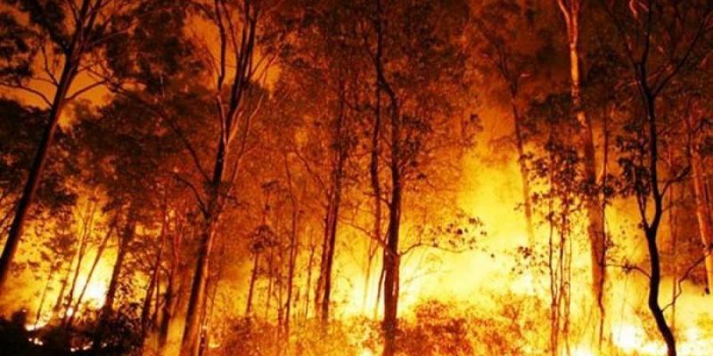 Perbankan Dunia dan Kesengajaan Pembakaran Hutan