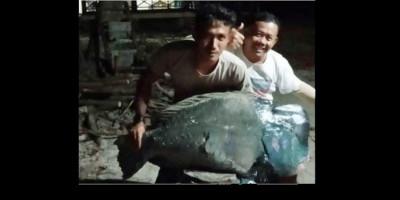 Viral Foto 2 Pemuda Tangkap Ikan Napoleon Raksasa di Ujung Kulon, KLHK Bungkam