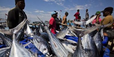 China Larang Produk Perikanan Indonesia, Ini Penjelasannya