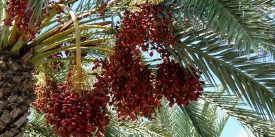 Abu Dahdah al-Anshari yang Tercepat Memberi Pinjaman kepada Allah