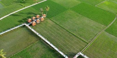 Wisata Sawah Desa Huntu Selatan Digandrungi Wisatawan
