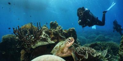Pelaku Usaha Wisata Selam di Labuan Bajo Dihimbau Terapkan CHSE