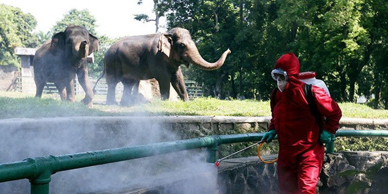 Taman Margasatwa Ragunan Batasi Pengunjung 2000 Orang Per Hari