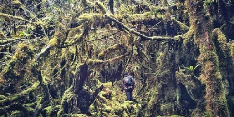 Pesona Gunung Bukit Raya, Ritual Adat dan Hutan Rimba yang Jarang Dijamah