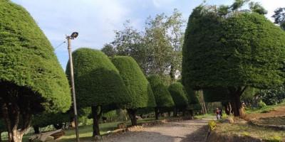 Bukit Jamur Ciwidey, Nuansa Alam Bak Negeri Dongeng
