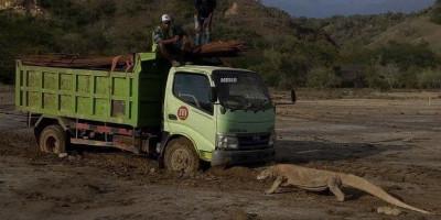 Foto Komodo Viral, Balai TNK Tutup Pulau Rinca, Semua Orang Dilarang Mengambil Gambar