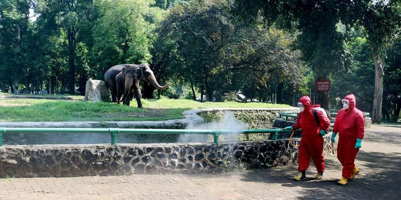 Taman Margasatwa Ragunan Cukup Ramai, Pengunjung Berolah Raga Sambil Refreshing