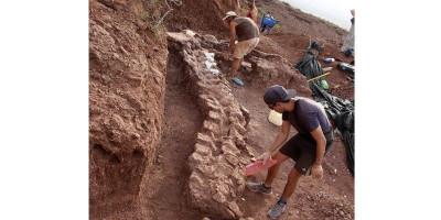 Fosil Hewan Terbesar yang Pernah Ditemukan