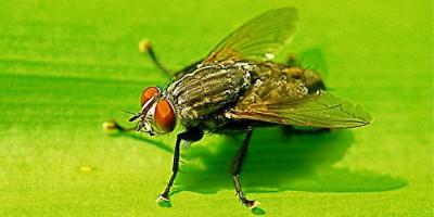 Meniti Titian Lalatomologi