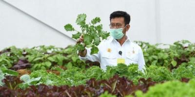 Potensi Kekuatan Perekonomian dari Urban Farming