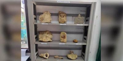 Museum Sri Asih Pakidulan Koleksi 500 Fosil Hewan Laut Purba