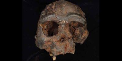 Temuan Baru dari Jejak Denisovan di Asia Tenggara