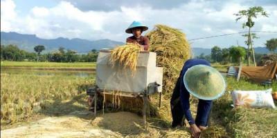 Dedi Mulyadi Minta Pemerintah Segera Serap Gabah Petani