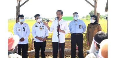 Panen di Indramayu, Presiden Jokowi: Pemerintah Tidak Suka yang Namanya Impor Beras