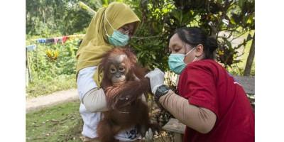 Fakultas Kehutanan UGM Ungkap Sejumlah Satwa Terancam Punah di Alam Liar