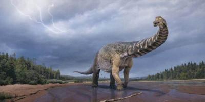 Australotitan, Dinosaurus Terbesar dari Australia
