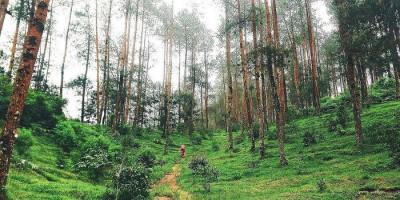 Pendakian ke Gunung Merbabu Sudah Dibuka, Simak Syaratnya
