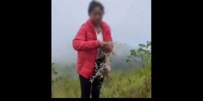 Viral Perempuan Asyik Petik Bunga Edelweis di Kawasan Gunung Abang