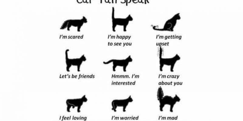 Yuk Belajar Bahasa Kucing !