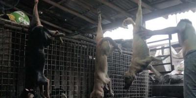 Pedagang yang Jual Daging Anjing di Pasar Senen Akhirnya Disanksi